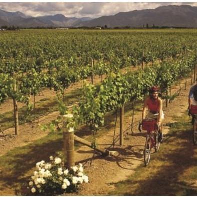 wine-by-bike