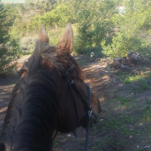 horse-trails-1