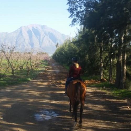 horse-trails-2