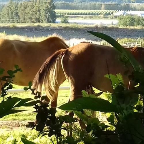 horse-trails-3